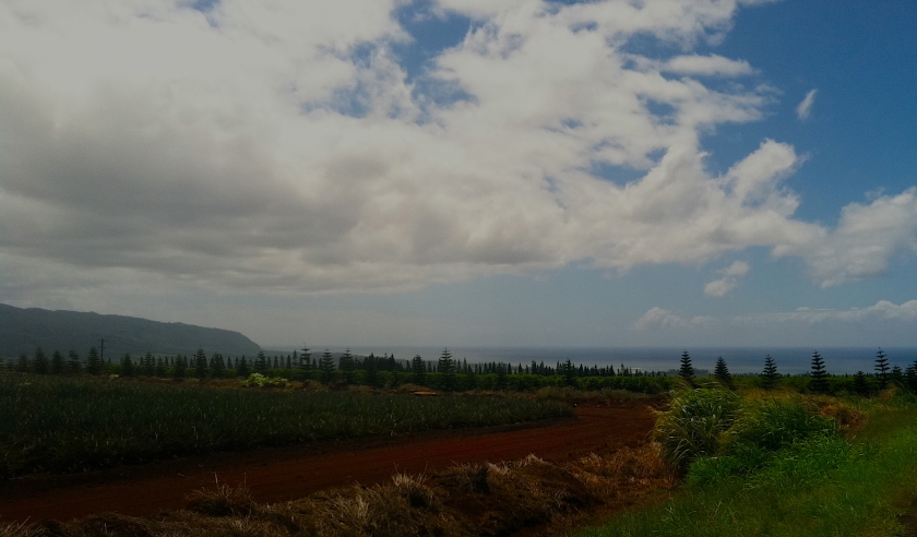 Coccoa plantation with mountains and sea in background
